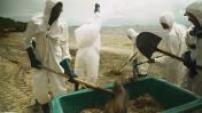 Martinique : illustrations des algues sargasses et nettoyage des plages