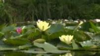 Visite du jardin de Giverny