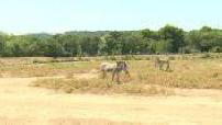 Les animaux de la réserve Africaine de Sigean