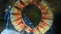 Toruk, nouveau spectacle du Cirque du Soleil